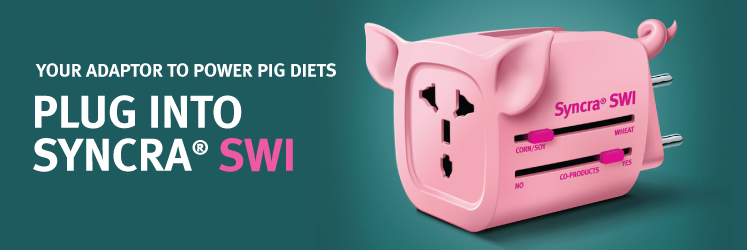Syncra SWI - your adaptor to power pig diets